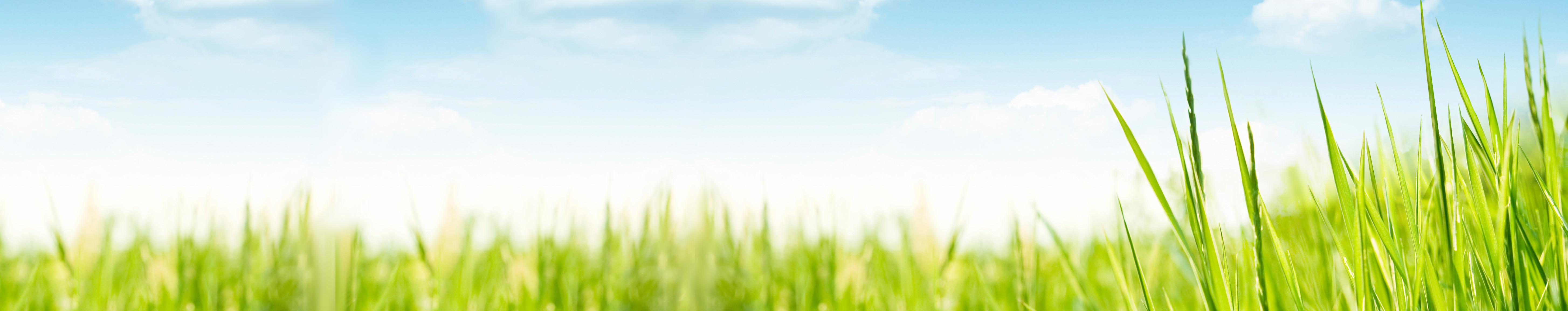 grass_wide_highres
