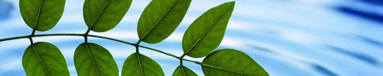 leaves_wide1