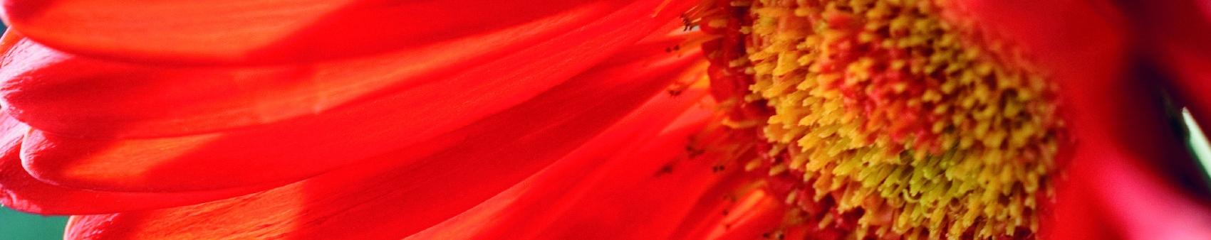 redflower_wide