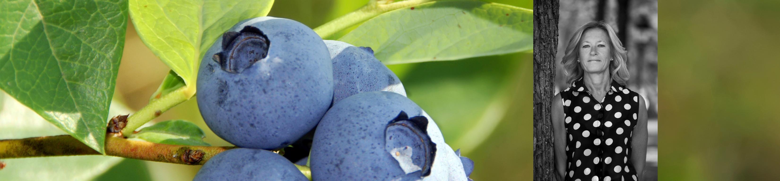 AK_blueberry